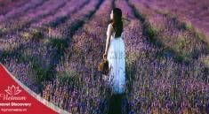 canh-dong-hoa-lavender-dalat-tophomestay